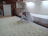 蒸米に麹菌を振りかける